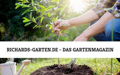 Baum pflanzen – So pflanzen und pflegen Sie Ihren Baum richtig